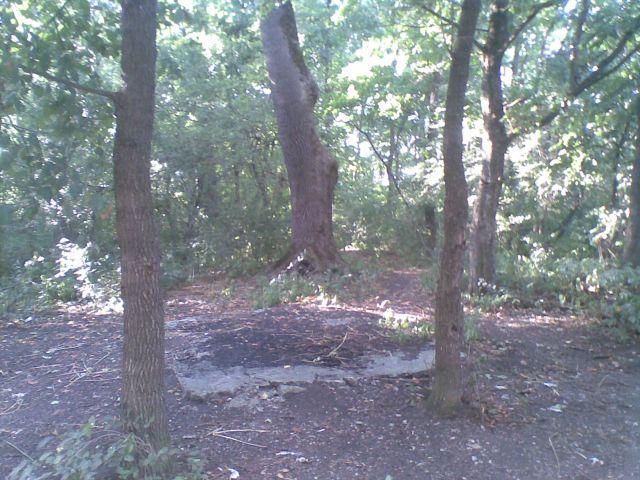 Rezervatia naturala Comana 17 09 2010