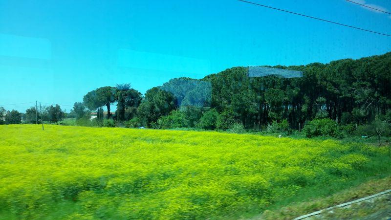 din trrenul spre Pisa - Toscana