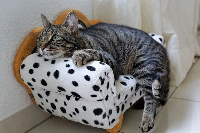 sindromul burnout pisica pe canapea